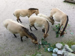 hungry horses are sales team