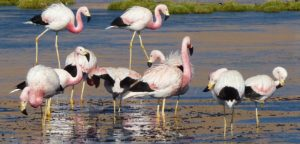 Flamingos sales manager post