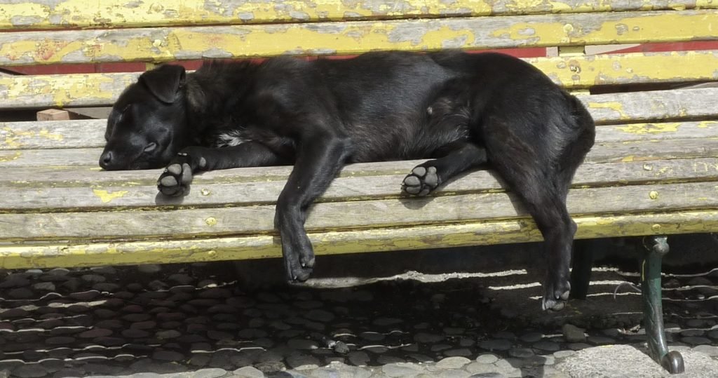 Sales Teams like sleeping dogs