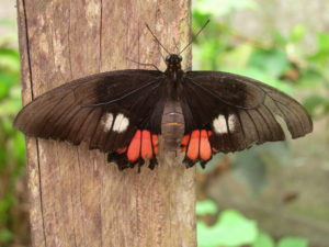 butterfly of sales recruitment